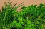 Выращивание зелени как бизнес (укропа, петрушки, лука, салата) 2020