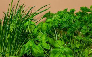 Выращивание зелени как бизнес (укропа, петрушки, лука, салата) 2019