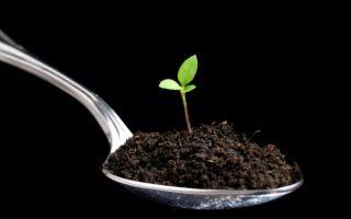 С чего начать производство гумуса как бизнес — расчет рентабельности, анализ спроса, организация производства