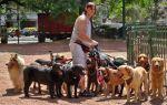 Разведение собак как бизнес в 2020 году