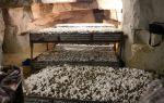 Выращивание грибов в подвале дома как бизнес 2019