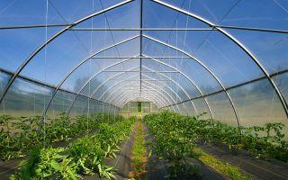Тепличный бизнес (с нуля) — как открыть тепличное хозяйство 2019