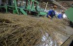 Производство льна: оборудование + технология изготовления 2020