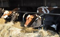 Бизнес-план: разведение крс на мясо + молочного направления как бизнес 2020