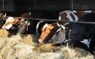 Бизнес-план: разведение крс на мясо + молочного направления как бизнес 2019