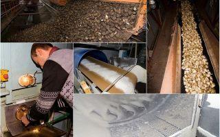 Выращивание сахарной свеклы, технология и оборудование для производства