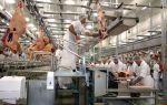 Производство мяса птицы и технология изготовления