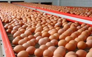 Производство яиц (2020)