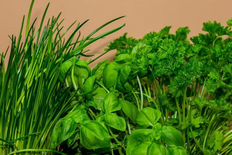 Выгодно ли выращивать зелень на продажу все за и против