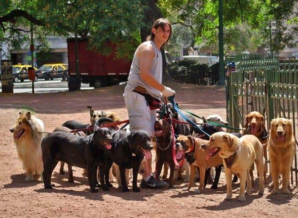 Разведение породистых собак как бизнес в домашних условиях