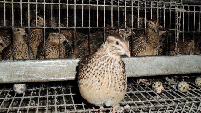Финансовые расчеты производство перепелиного яйца