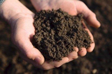Как заключить договор субаренды земельного участка сельскохозяйственного назначения - рекомендации