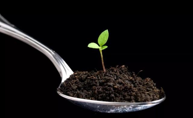 С чего начать производство гумуса как бизнес - расчет рентабельности, анализ спроса, организация производства